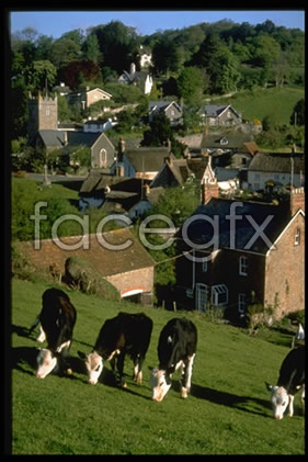 Rural housing cattle pictures