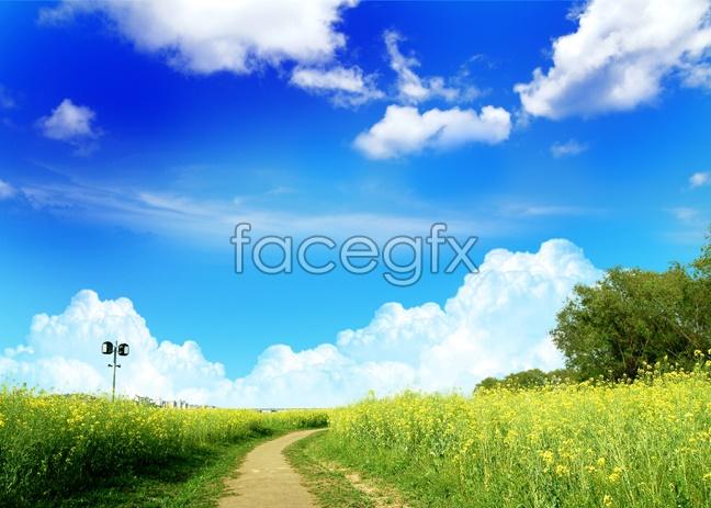 Wild landscape picture