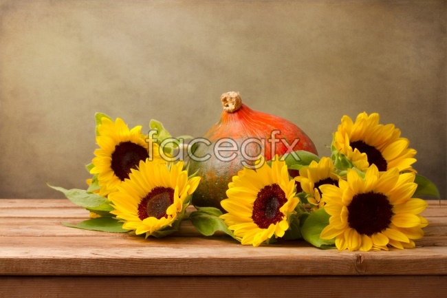 Yellow sunflower picture