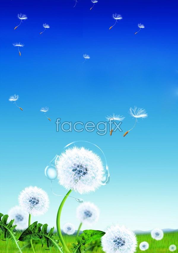 Dandelion landscape picture