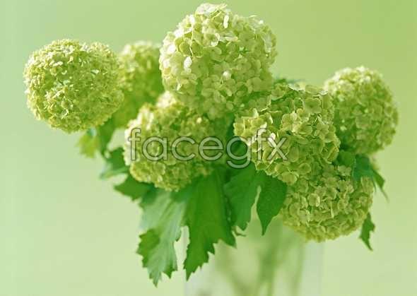 Green bouquet floral arrangement