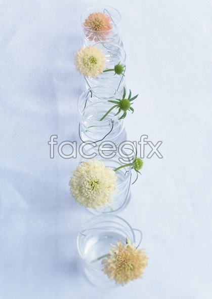Indoor flower 60