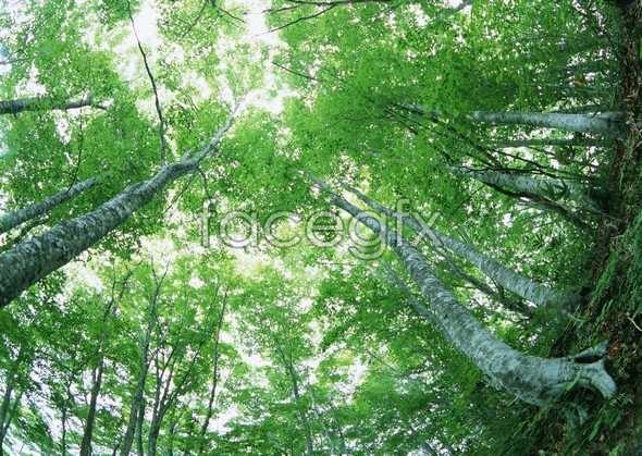 Jungle beauty 39
