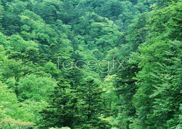 Jungle beauty of 192