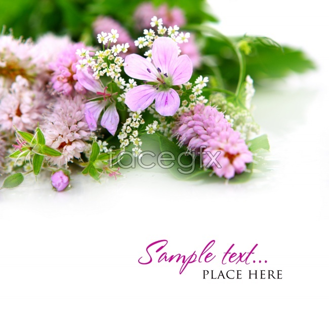 Lavender flowers HD pictures