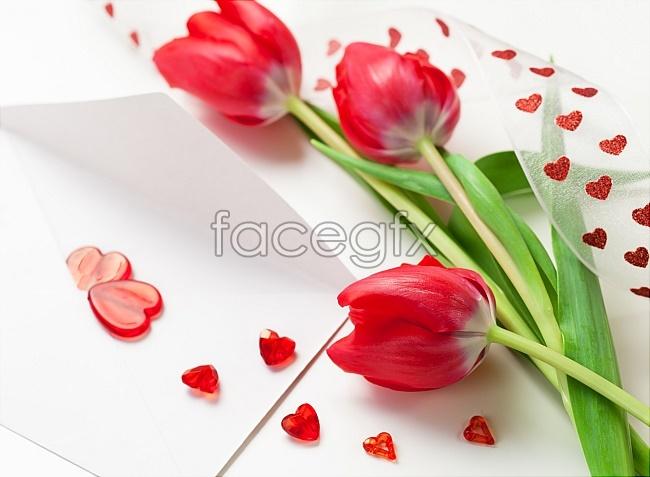 Tulip red love picture