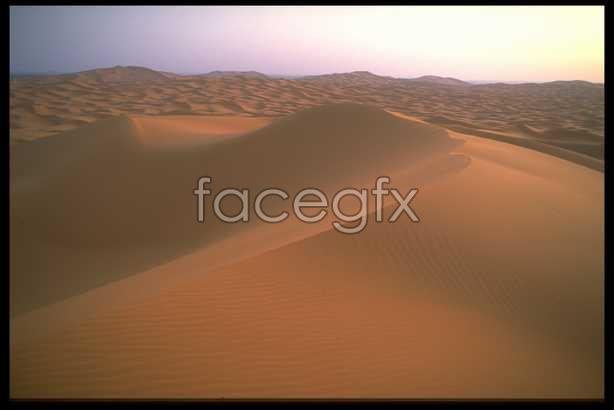 Desert beauty # 17