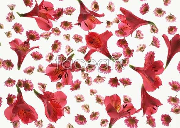 Flowers close-up 1040