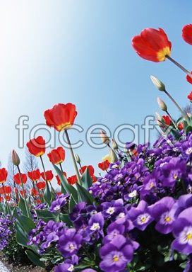 Flowers close-up 2,073