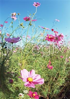 Flowers close-up 2,076