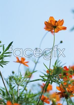Flowers close-up 2,090