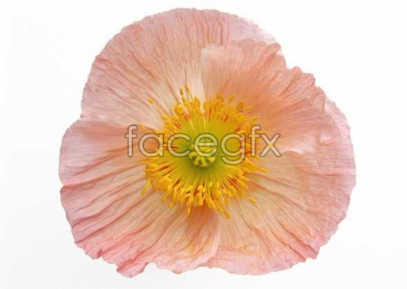 Flowers close-up 451