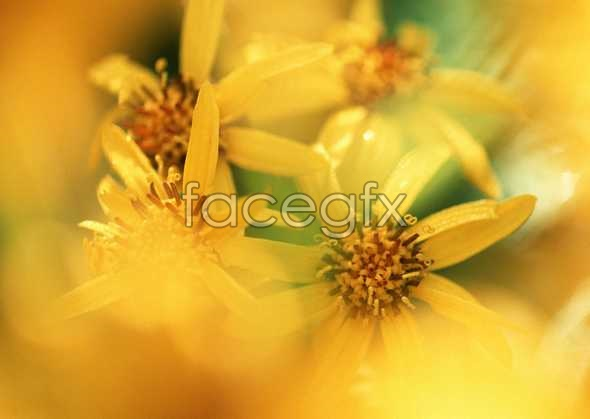 Flowers close-up 628