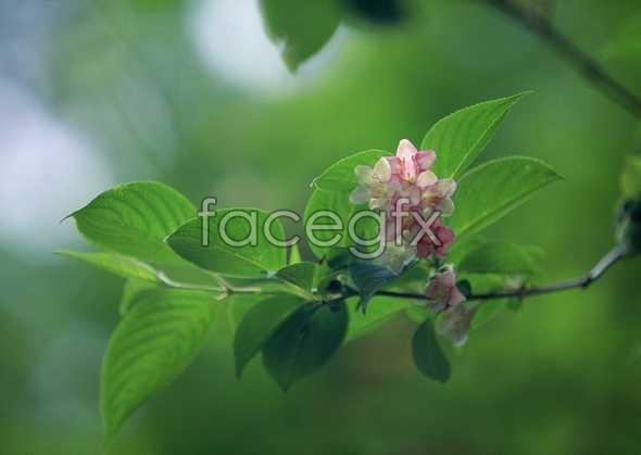 Flowers close-up 733