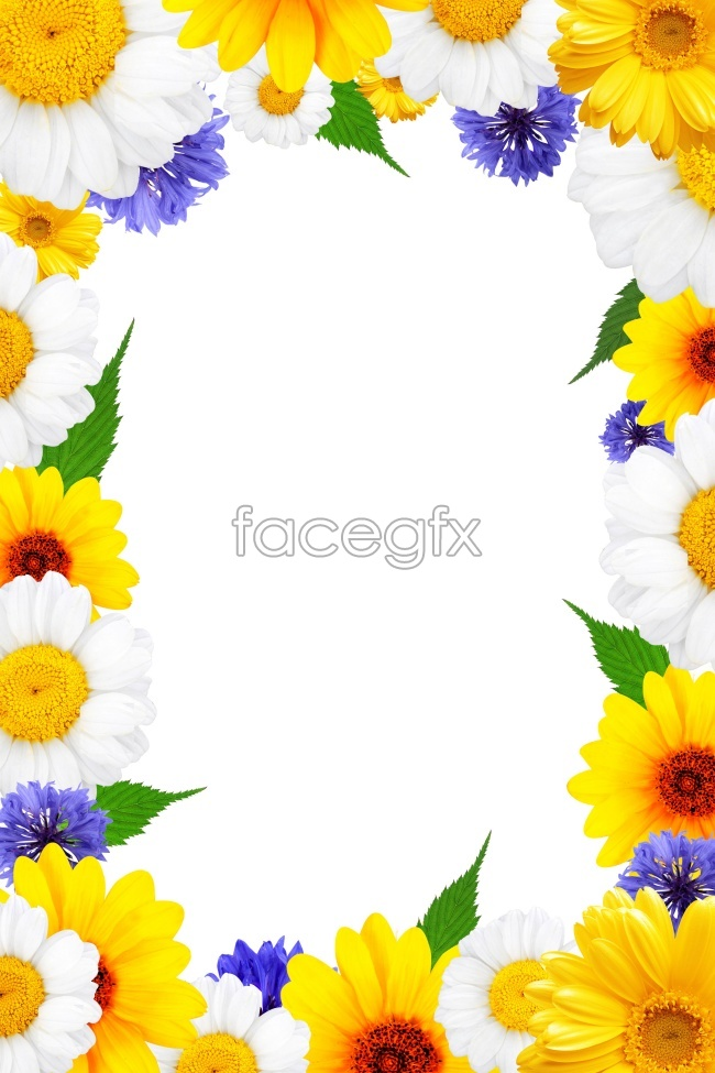 HD flower border pictures