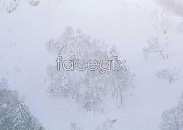 Ice 392