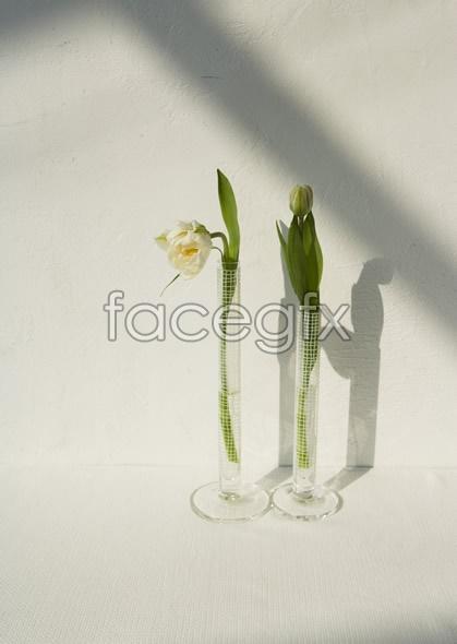 Indoor flower 68