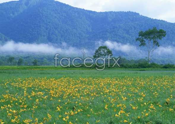 Jungle beauty of 268