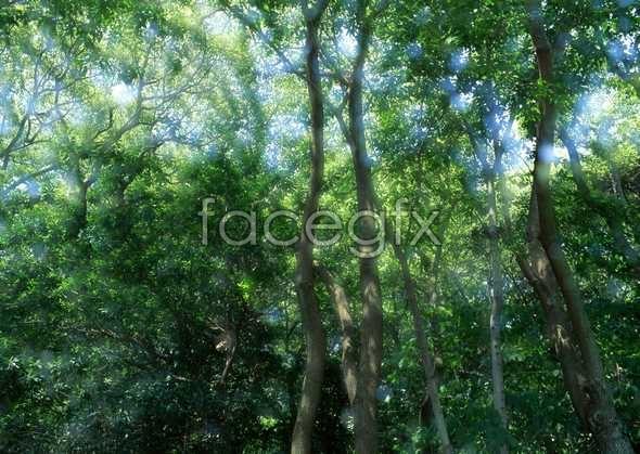 Jungle beauty of 277