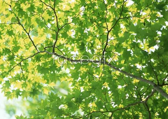 Jungle beauty of 314