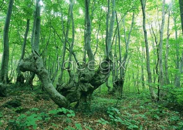 Jungle beauty of 36