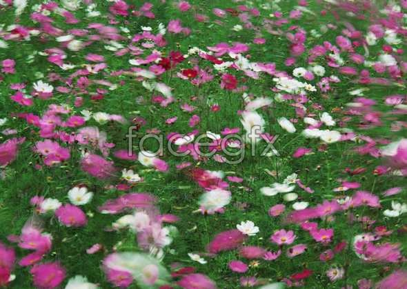 Thousands of flowers 663