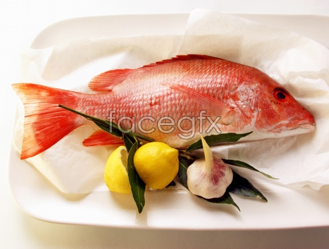 Tropical fish pictures HD