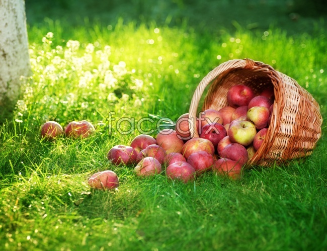 Apples on the grass picture