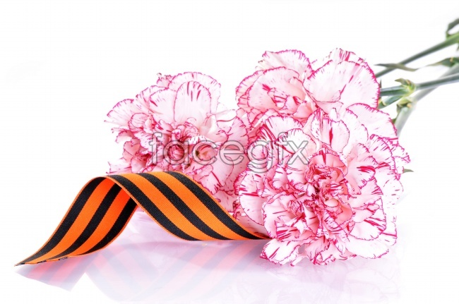 Carnation bouquet picture material