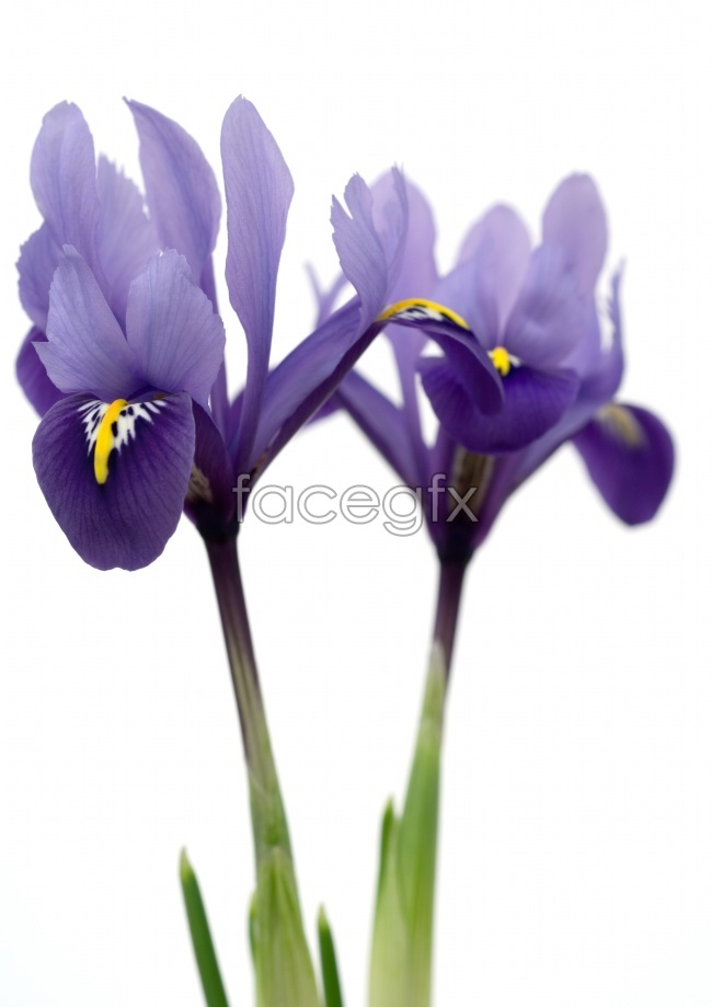 Elegant purple flowers high resolution images