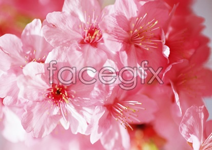 Flowers and pictures of 2,134