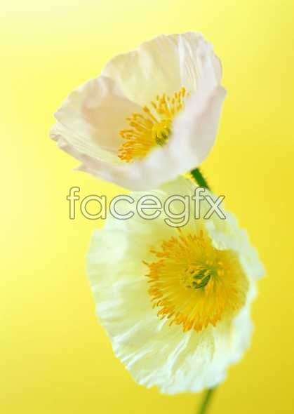 Flowers close-up 1421