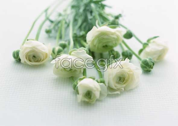 Flowers close-up 1741