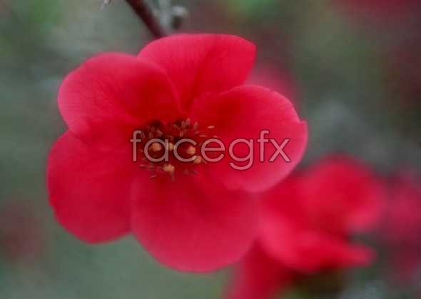 Flowers close-up 742