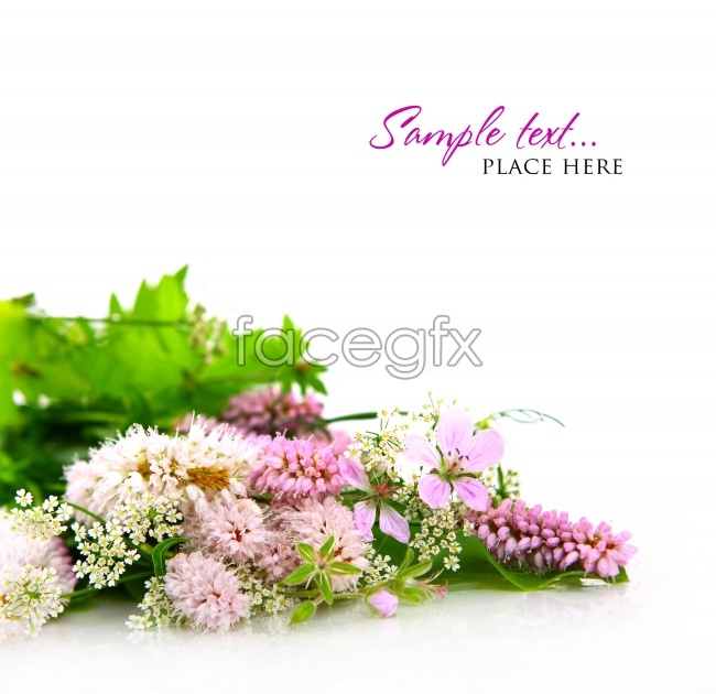HD flowers card pictures