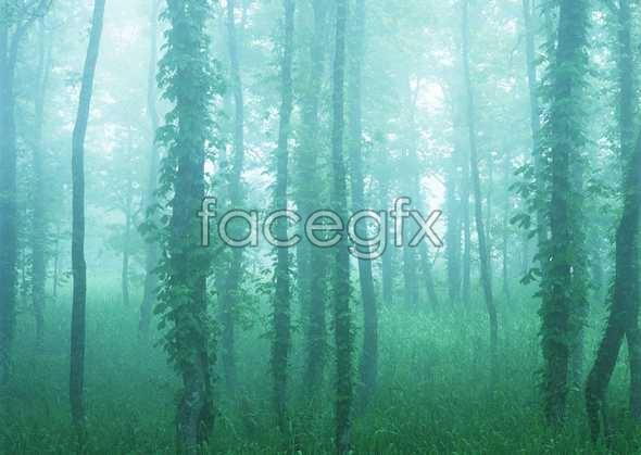 Jungle beauty of 146
