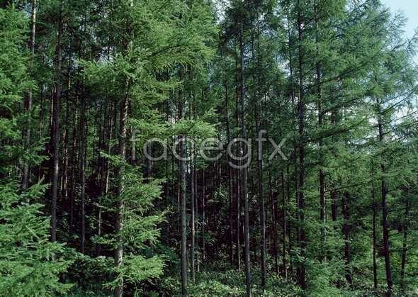 Jungle beauty of 508