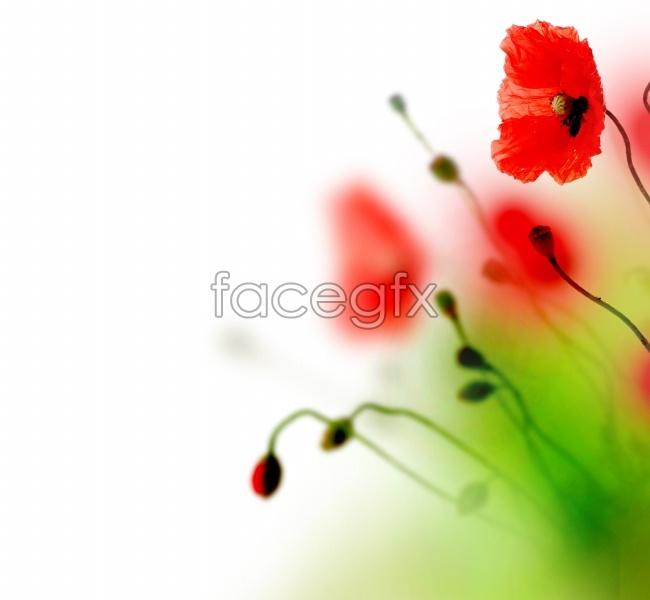 Poppy flower background images
