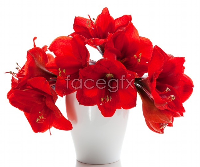 Red Lily bouquet photo