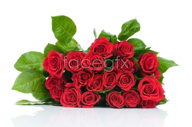 A bouquet of roses picture material