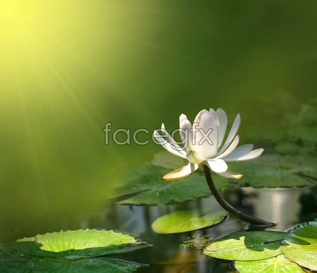 Encyclopedia of Lotus HD pictures