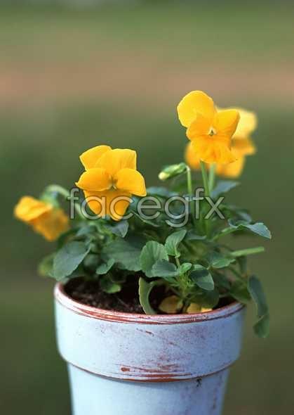 Flowers close-up 1207