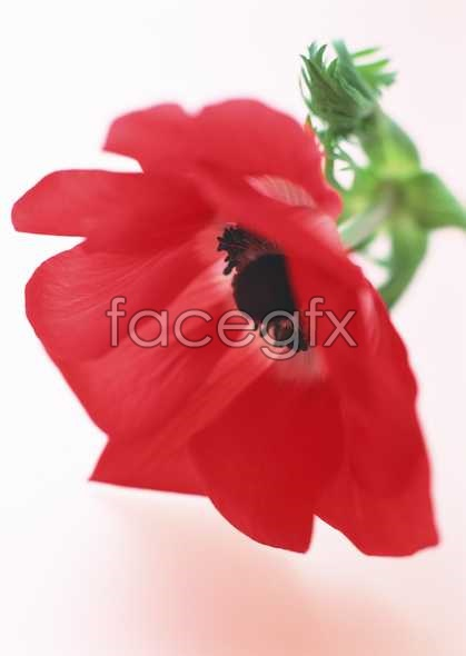 Flowers close-up 1681