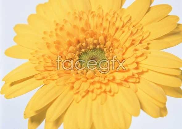 Flowers close-up 176