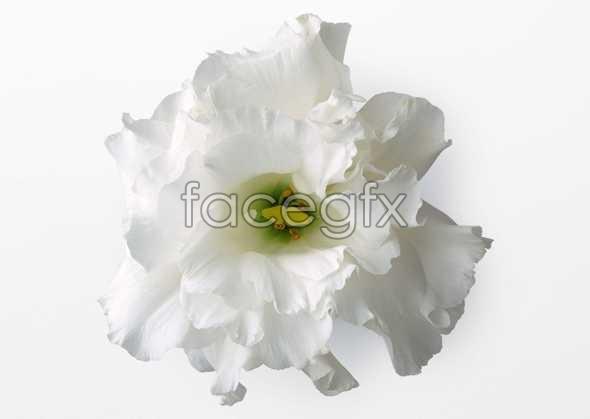 Flowers close-up 464