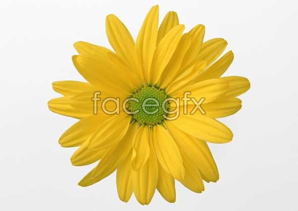 Flowers close-up 470