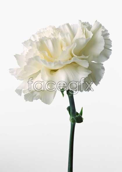 Flowers close-up 531