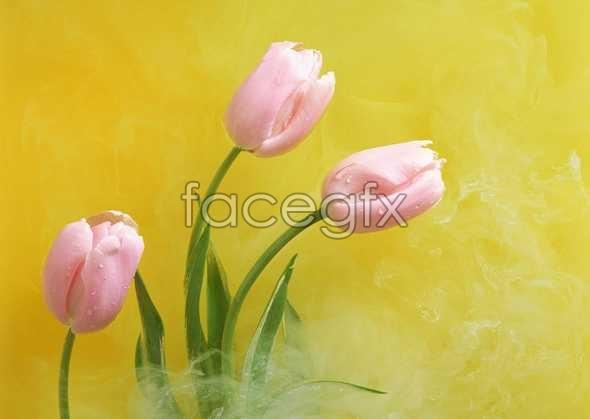 Flowers close-ups 989