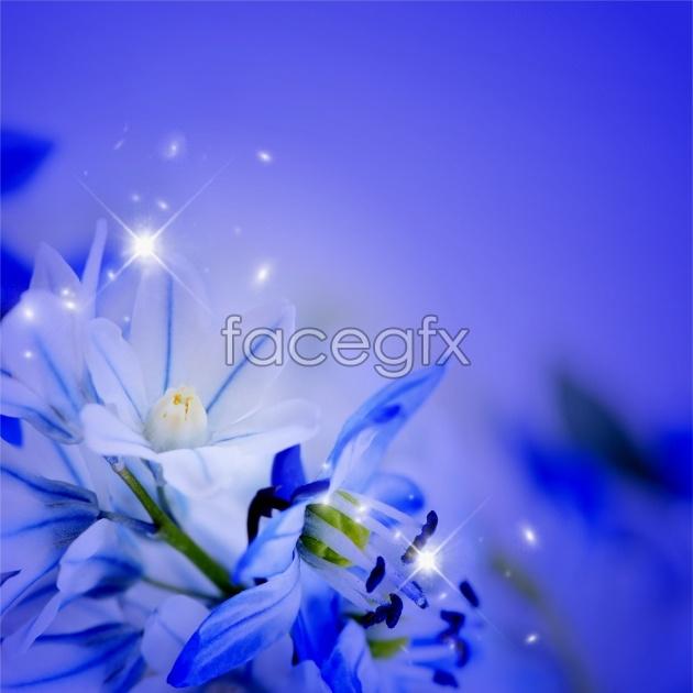 HD purple flowers picture