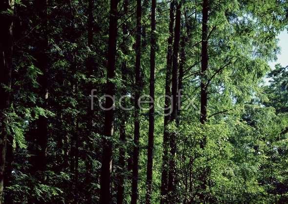 Jungle beauty of 541